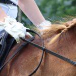 Zevenbergse Paardendagen 2019